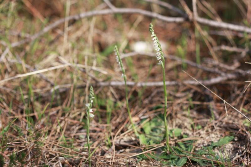 [Turquie] : Orchidée tardives - Page 2 25-10-14