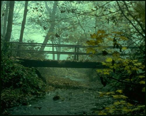 La forêt Foret210