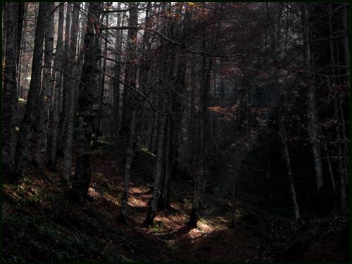 La forêt Foret310