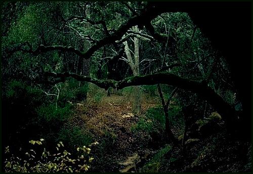 La forêt Foret_10