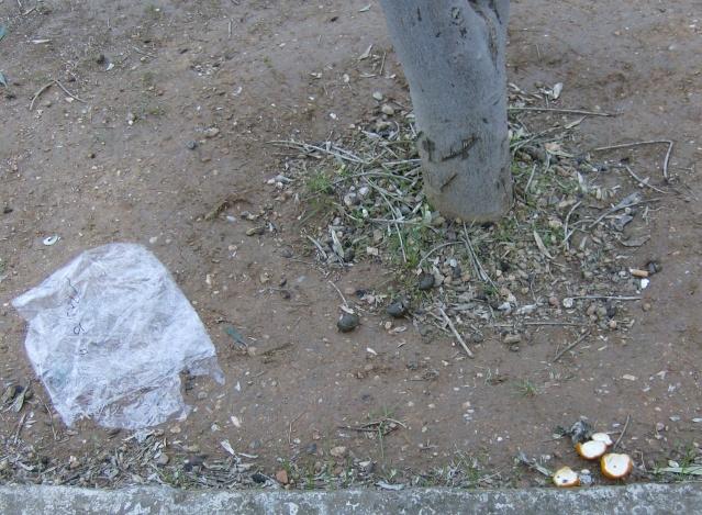Ένα δέντρο από ... σκουπίδια!!! Hpim6821