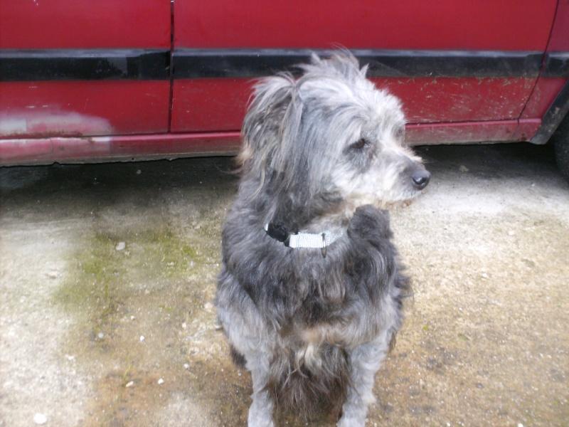 trouvée chienne croisée à malissard( 26) Hpim3810