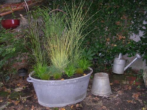 Graminées en pot Bassin10