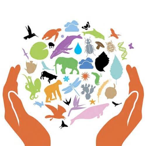 4 ΟΚΤΩΒΡΗ - Παγκόσμια ημέρα των ζώων  Pagkos11