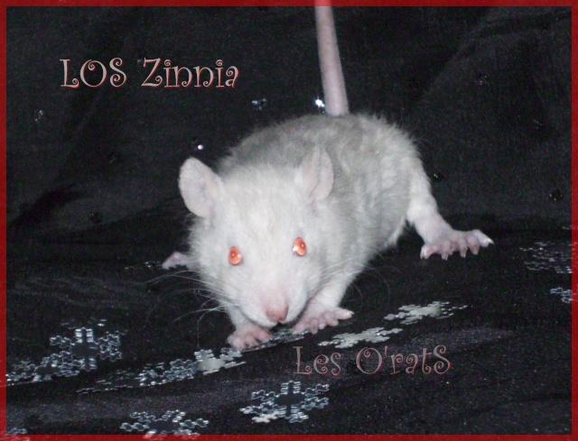 zinnia11.jpg