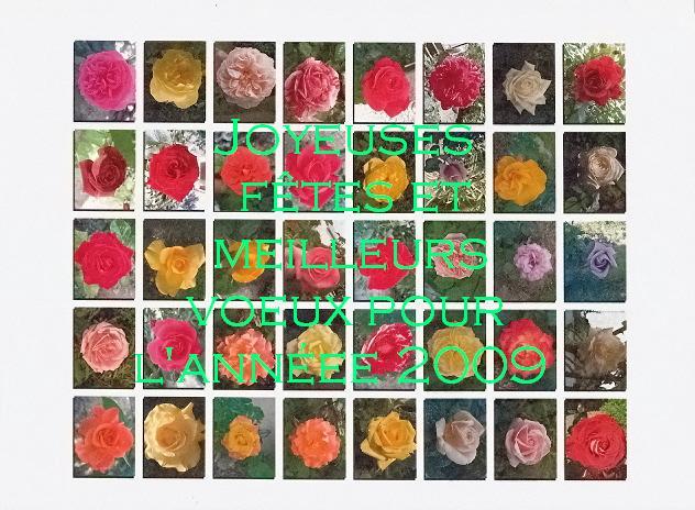 Petit album de roses - Page 3 Numari10