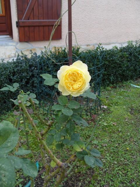 Petit album de roses - Page 3 S1050118