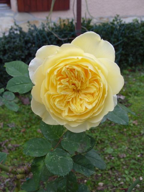 Petit album de roses - Page 3 S1050119