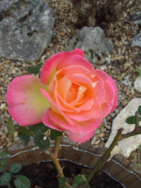 Petit album de roses - Page 3 S1050120