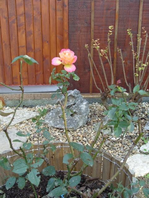 Petit album de roses - Page 3 S1050121