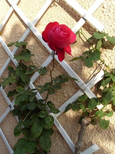 Petit album de roses - Page 3 S1050124