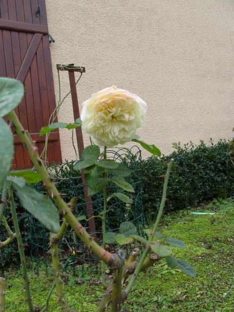 Petit album de roses - Page 3 S1050212