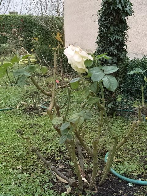 Petit album de roses - Page 3 S1050213