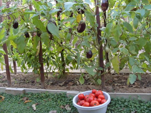 nouvelles plantations de légumes - Page 2 S1051818