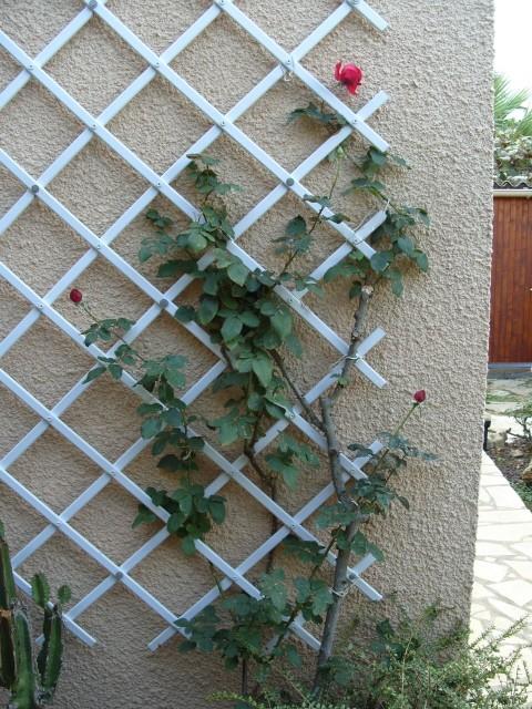 Petit album de roses - Page 3 S1051919