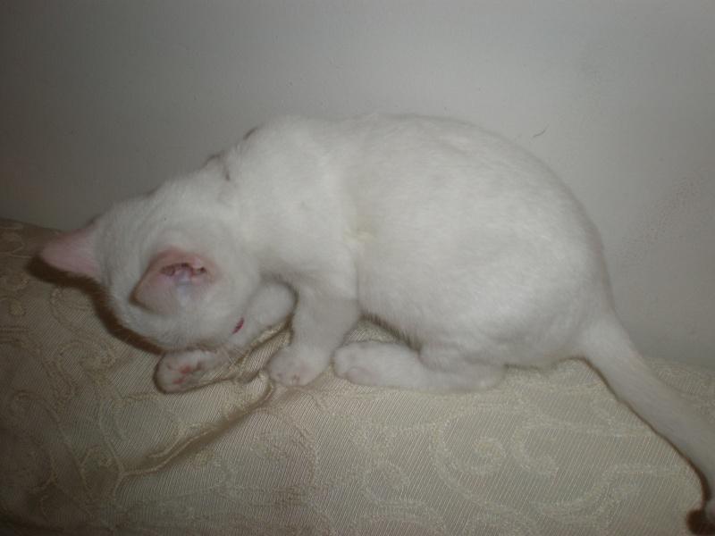 Τυφλό Γατάκι - Σελίδα 5 Pb080311