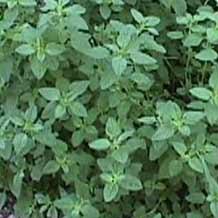 "plantes medicinales ""apprenez en jouant"" - Page 11 Plante10"
