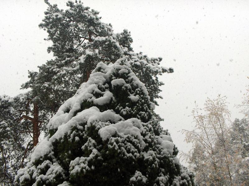 SNOW! Winter13