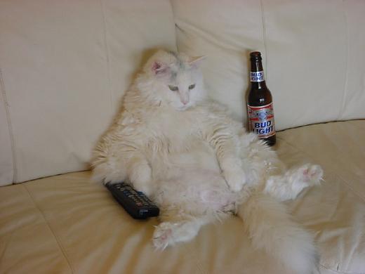 Pour ceux qui s'y connaissent en chat --> SOS :-/ - Page 2 Photos10