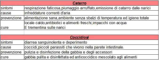 catarro e coccidiosi negli agapornis Catarr10
