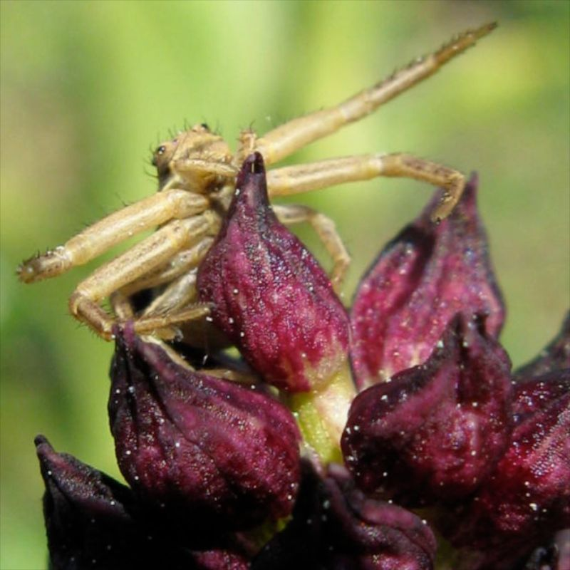 orchidées et araignées 4_auf_10