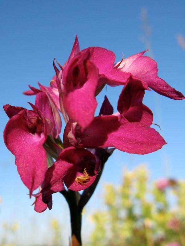 orchidées et araignées 5_auf_10