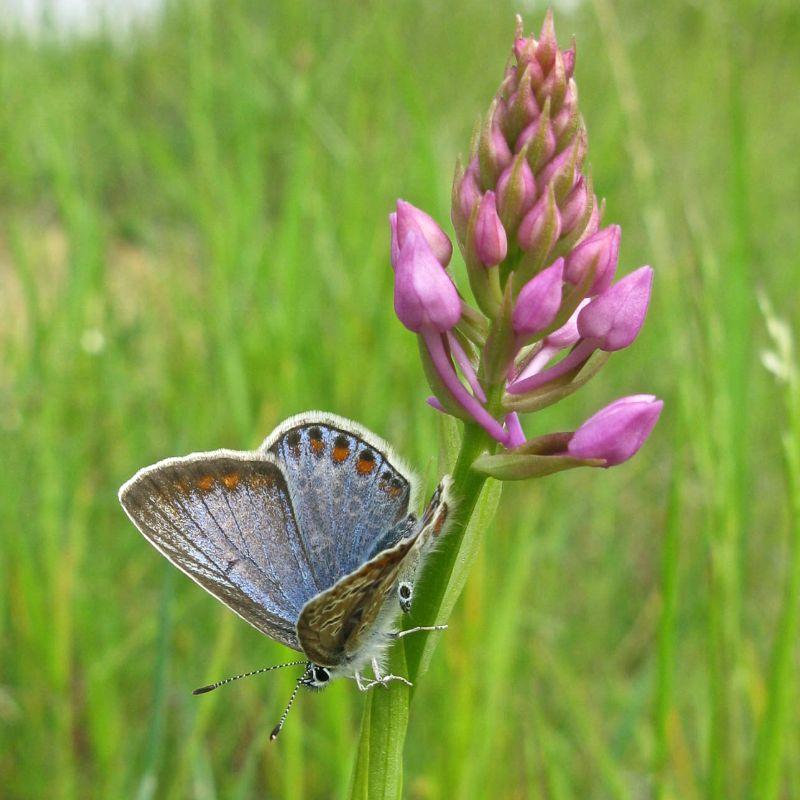 orchidees et papillons - Page 2 Battem10