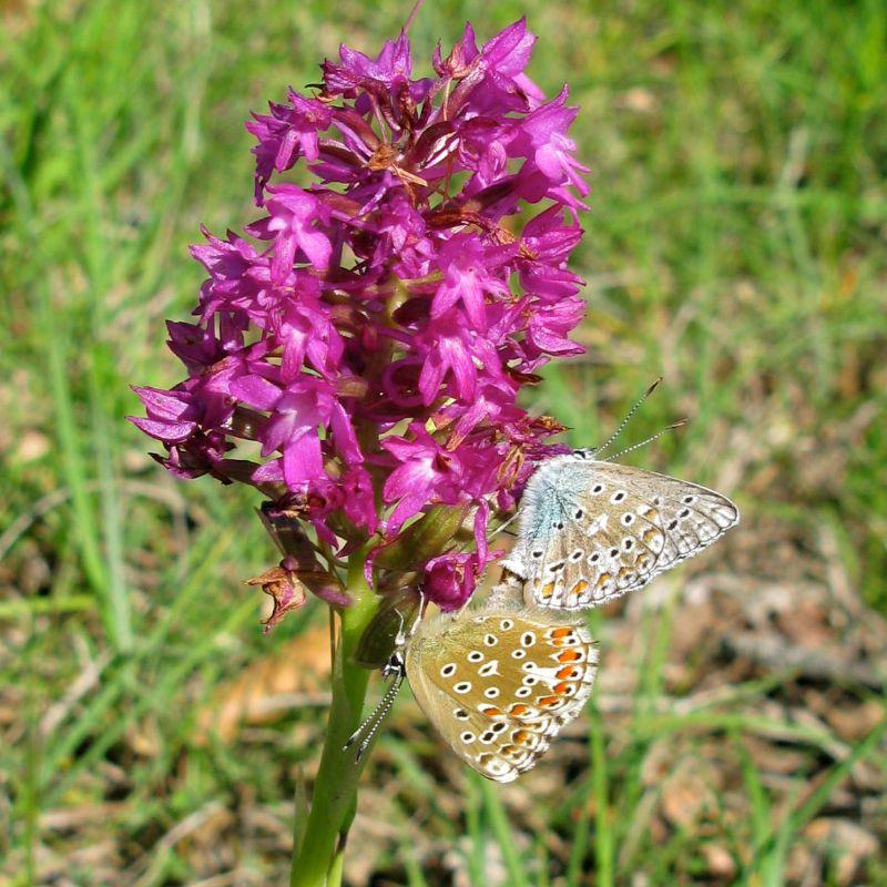 orchidees et papillons - Page 2 Battem11