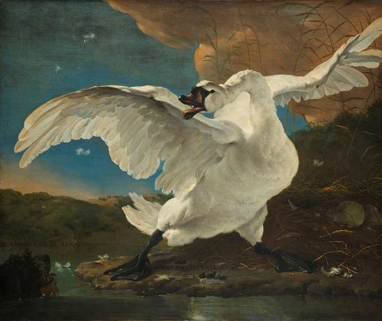 El cisne amenazado-Asselijn De_bed10
