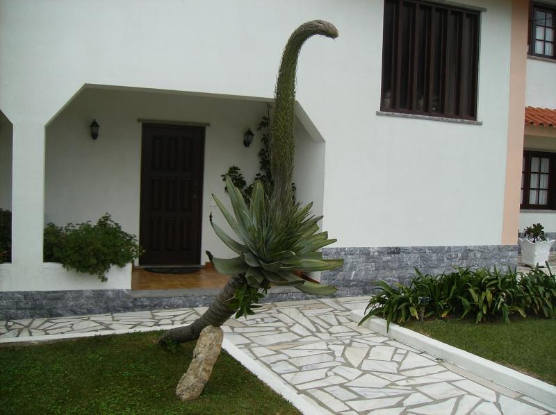 cacto(jardim dos meus pais) Imagem17