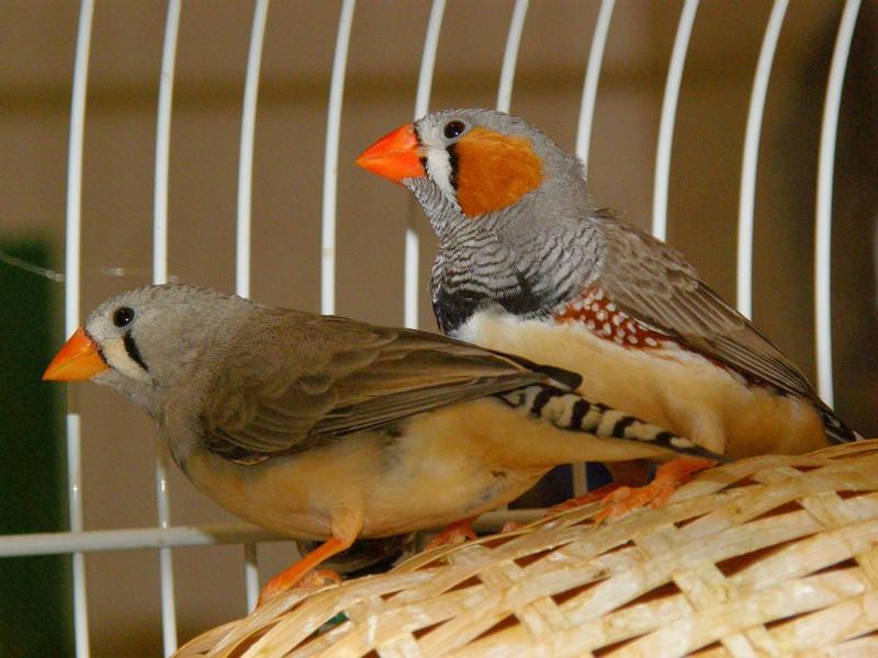un oiseau - blucat - 30 octobre trouvé par martine Pb060010