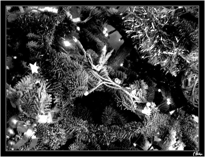 L'hiver, les fêtes, etc... Sapin_10