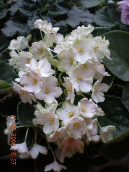 ma's lily pad Dscn1321