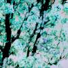Galerie de « Choses » By Etna ~ Tsuu10