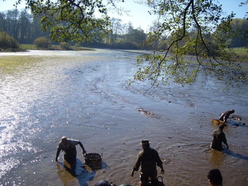 vidange et pêche d'un étang. Atang_10