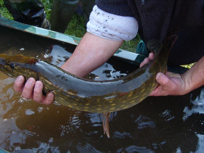 vidange et pêche d'un étang. Beau_b10