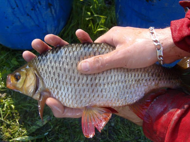 vidange et pêche d'un étang. Gros_r11