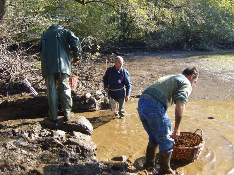 vidange et pêche d'un étang. Pacheu10