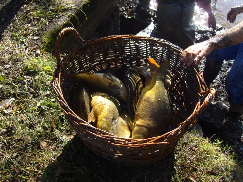 vidange et pêche d'un étang. Panier10