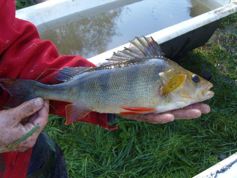 vidange et pêche d'un étang. Plus_g10