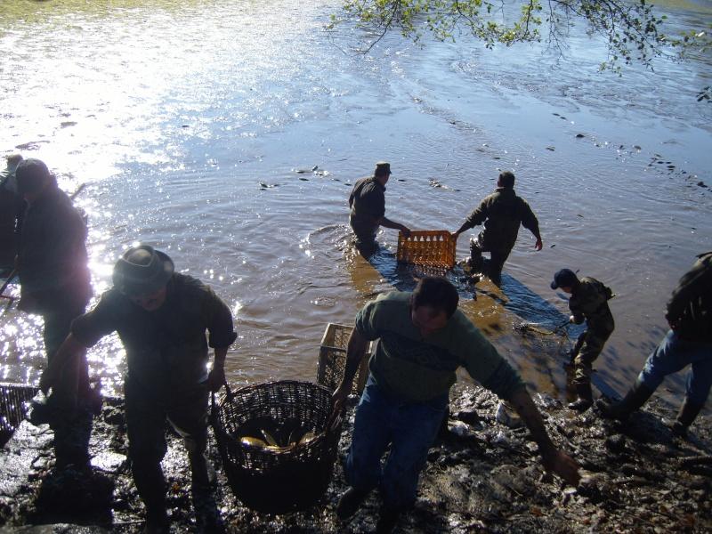 vidange et pêche d'un étang. Porteu10