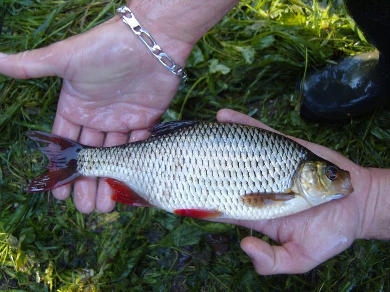vidange et pêche d'un étang. Roteng11