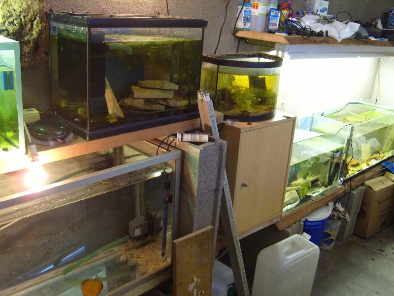 évolution fishroom de yannos54 S1031312