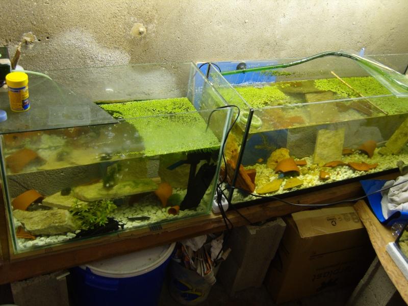 évolution fishroom de yannos54 S1031313
