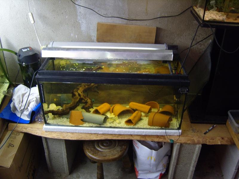 évolution fishroom de yannos54 S1031314