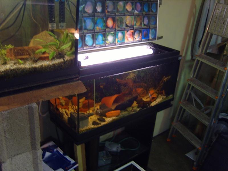 évolution fishroom de yannos54 S1031317