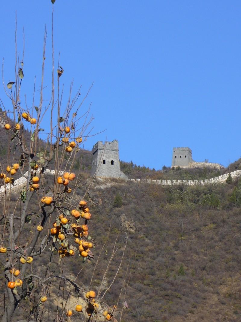 La grande muraille de Chine - Page 2 P1000611