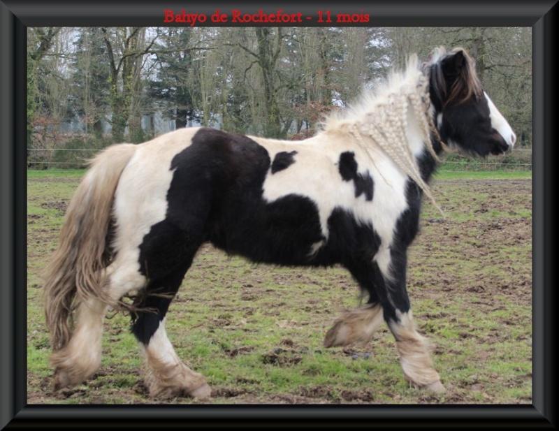 Domaine de Rochefort - 02/2014 Bahyo015