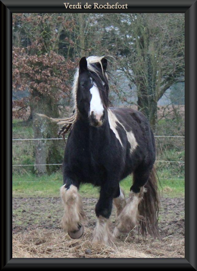 Domaine de Rochefort - 02/2014 Verdib14