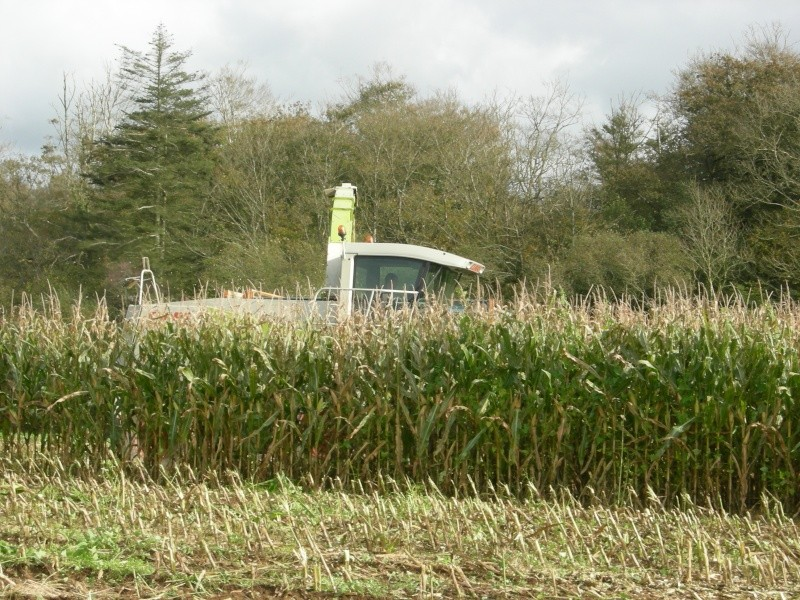 Ensilage de maïs 2008 - Page 6 Dscn6310